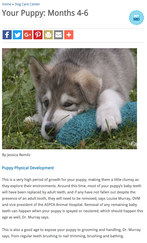 petmd2.png