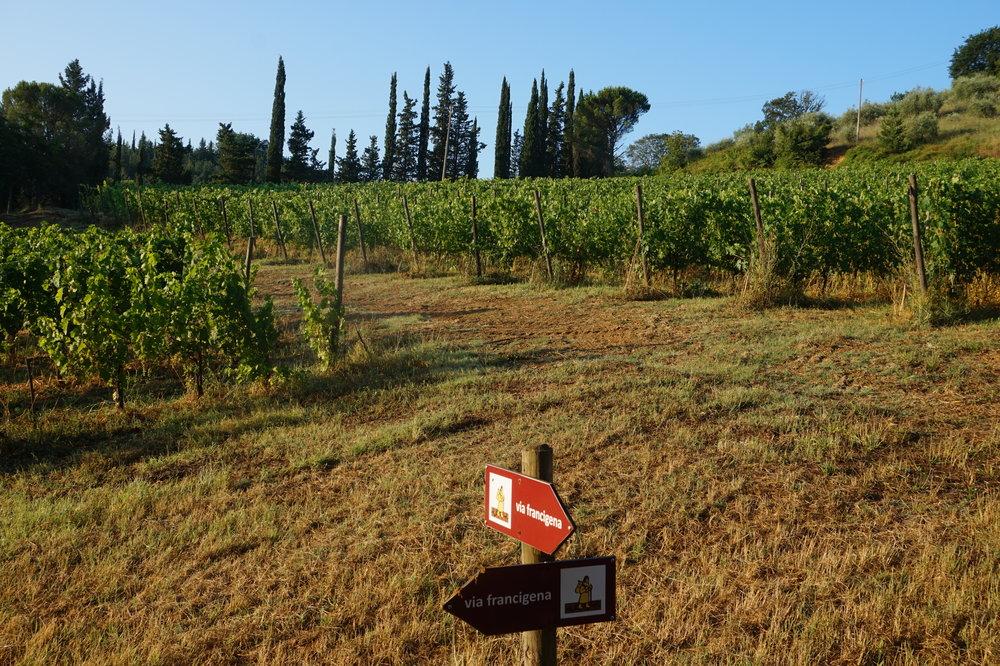 Walking in Tuscany, Via Francigena