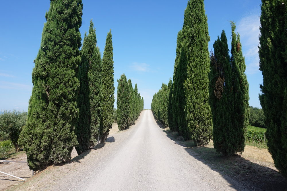 Hiking in Tuscany, Via Francigena