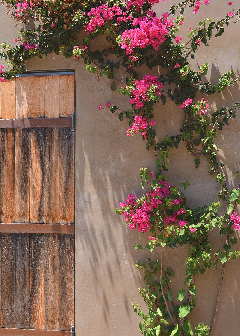 flowervine.jpg