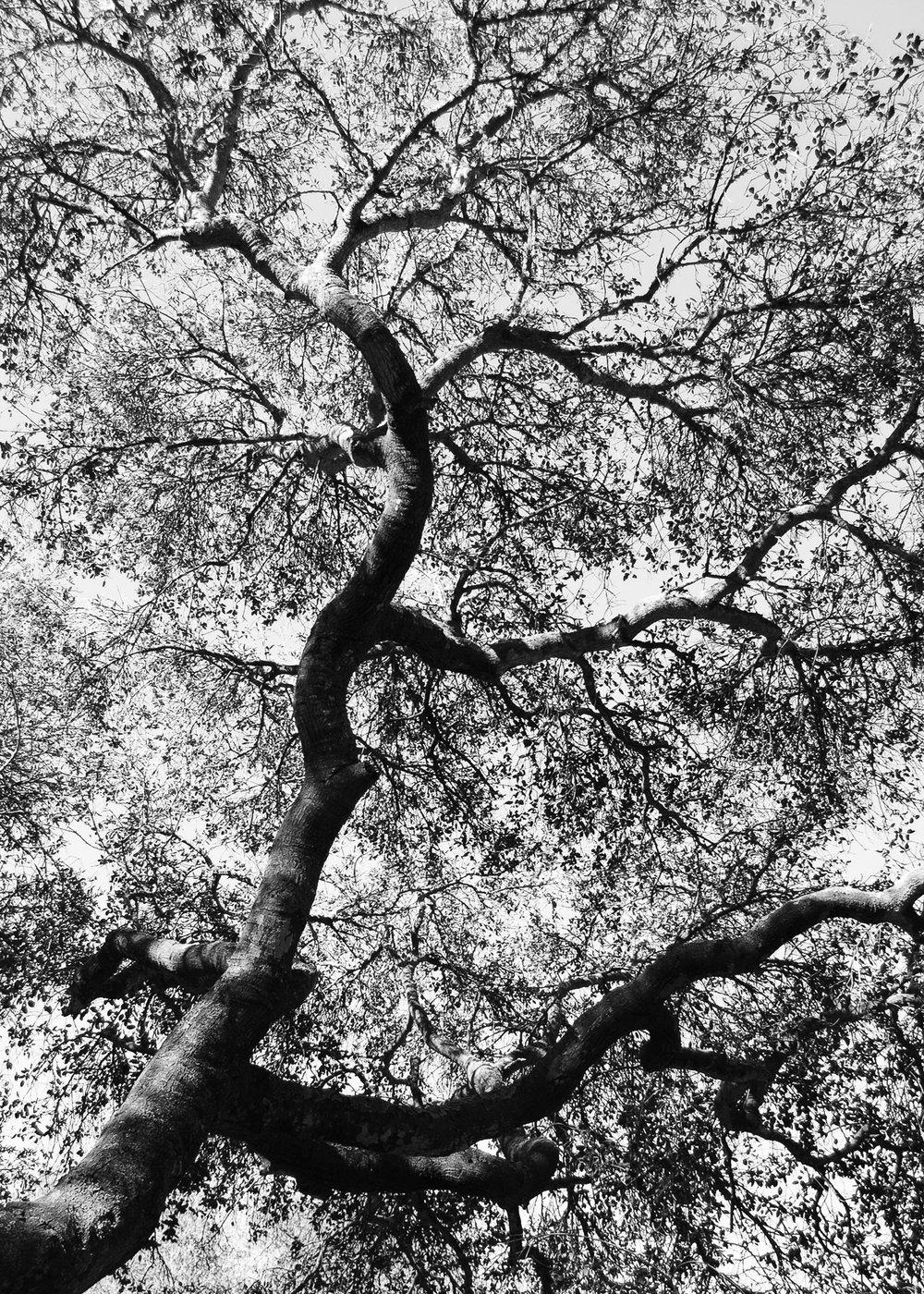 treeup.jpg