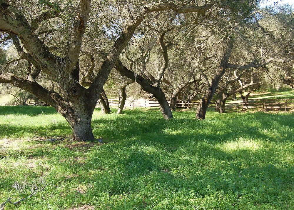 grasstrees.jpg