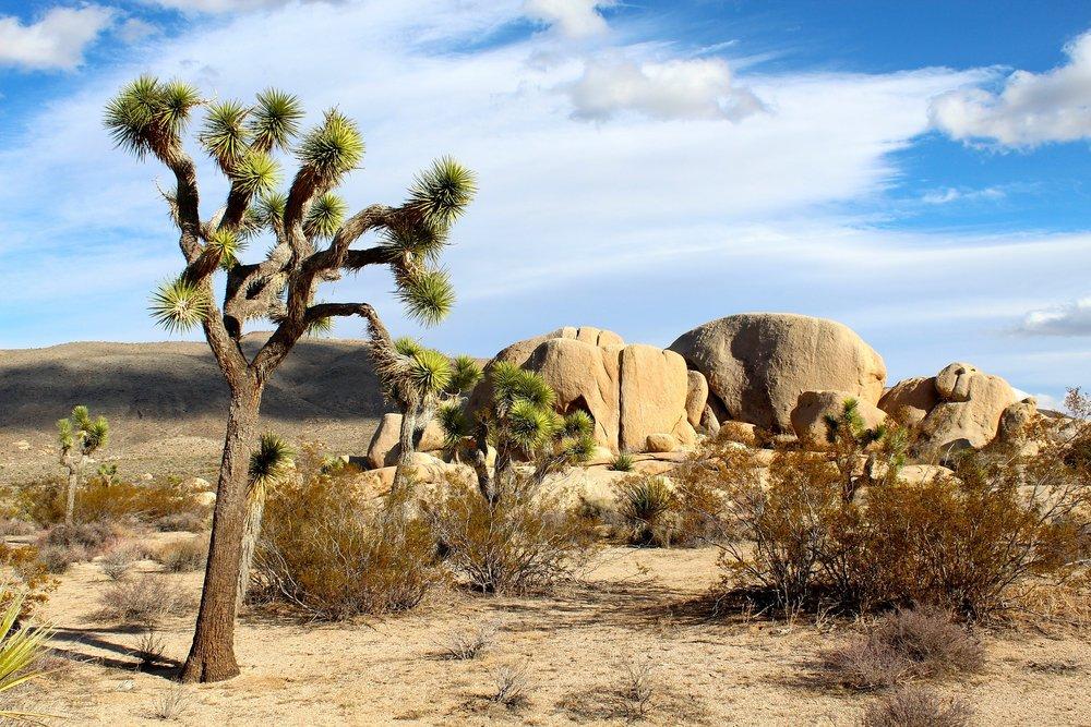 Mojave-Desert.jpg