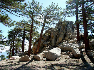 PEAK: Mt. Waterman - DIFFICULTY: 3/5SCENERY: TREES! epic cedar stands, pines, many nice boulders, a general sense of remotenessFUN FACT: Mt. Waterman operates the closest day ski area to the Los Angeles basin! (It has a very short ski season.)