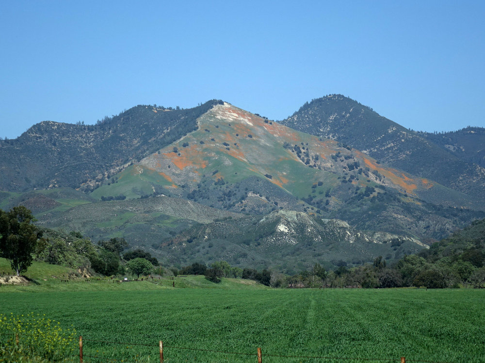 PEAK: Figueroa Mountain - DIFFICULTY: 2/5SCENERY: Beautiful oak groves and the entire Santa Ynez Valley!FUN FACT: Figueroa Mountain is named after Jose Figueroa, the same namesake of our very own Figueroa St. !