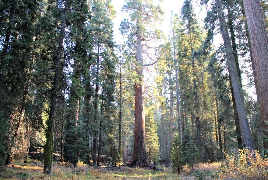 PEAK: SEQUOIA NATIONAL FOREST - DIFFICULTY: 3/5SCENERY: Lots of cool sequoia trees, mountains and awesome views!FUN FACT: Even though Redwoods are the tallest, Giant Sequoias are the world's largest trees!