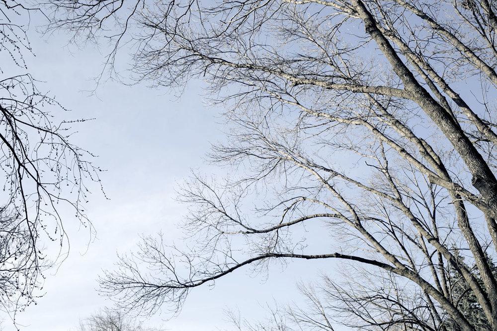 DAGS_TREES_IN_WINTER_01.jpg