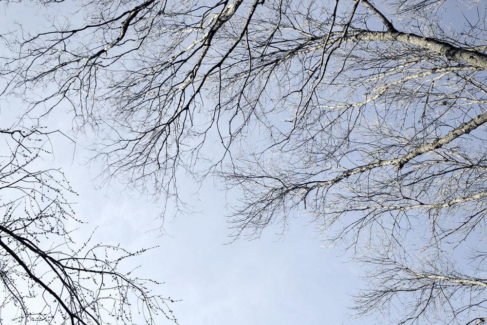 DAGS_TREES_IN_WINTER_02.jpg