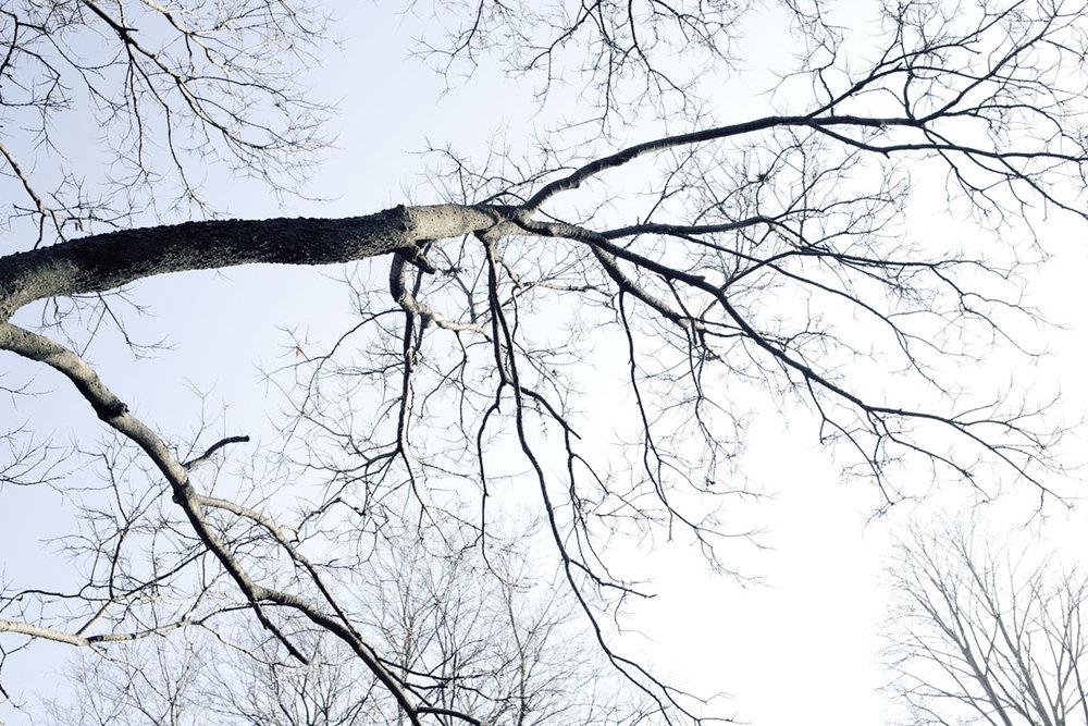DAGS_TREES_IN_WINTER_03.jpg