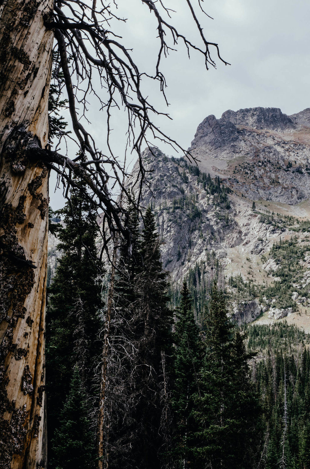 Nohku Crags near Cameron Pass in Northern Colorado