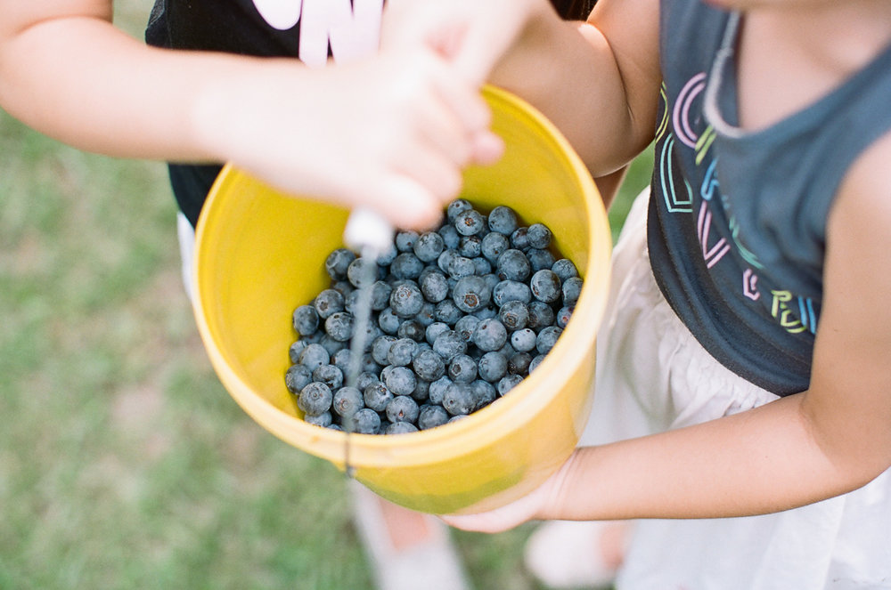 Summer Blueberry Picking Kids on Film Mississippi-18.jpg