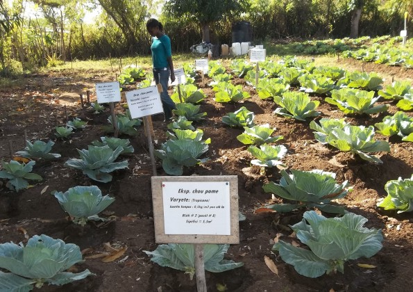 Tending the sustainable agricultural projects of SOIL Haiti. Photo courtesy of SOIL.