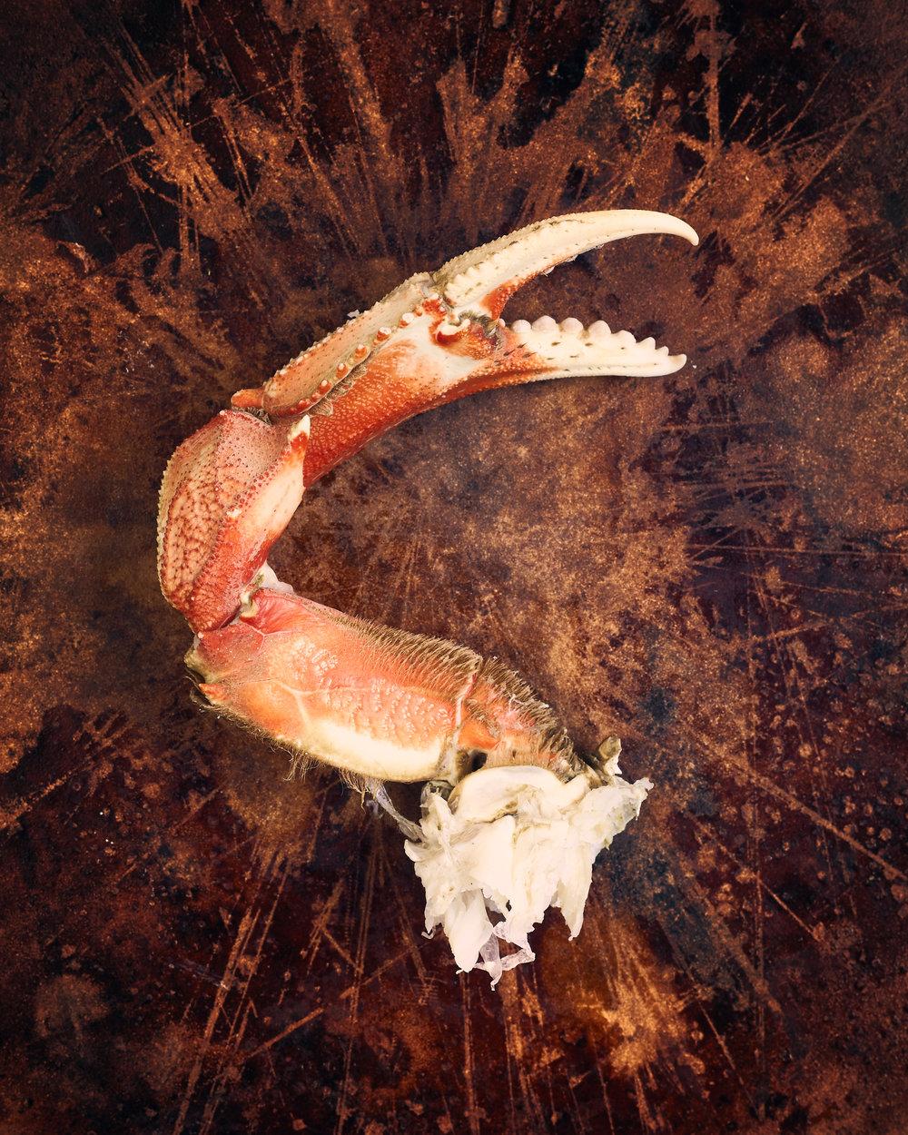 CrabClawStruggle.jpg