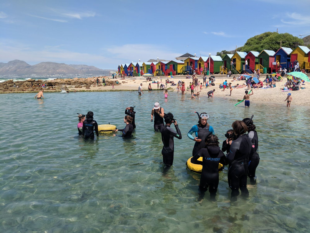 For a first ever ocean experience is tidal pool is perfect! There is so much life in our Cape tidal pools, but the semi enclosed space allows the kids to feel safe for their first time ever exploring the world below.