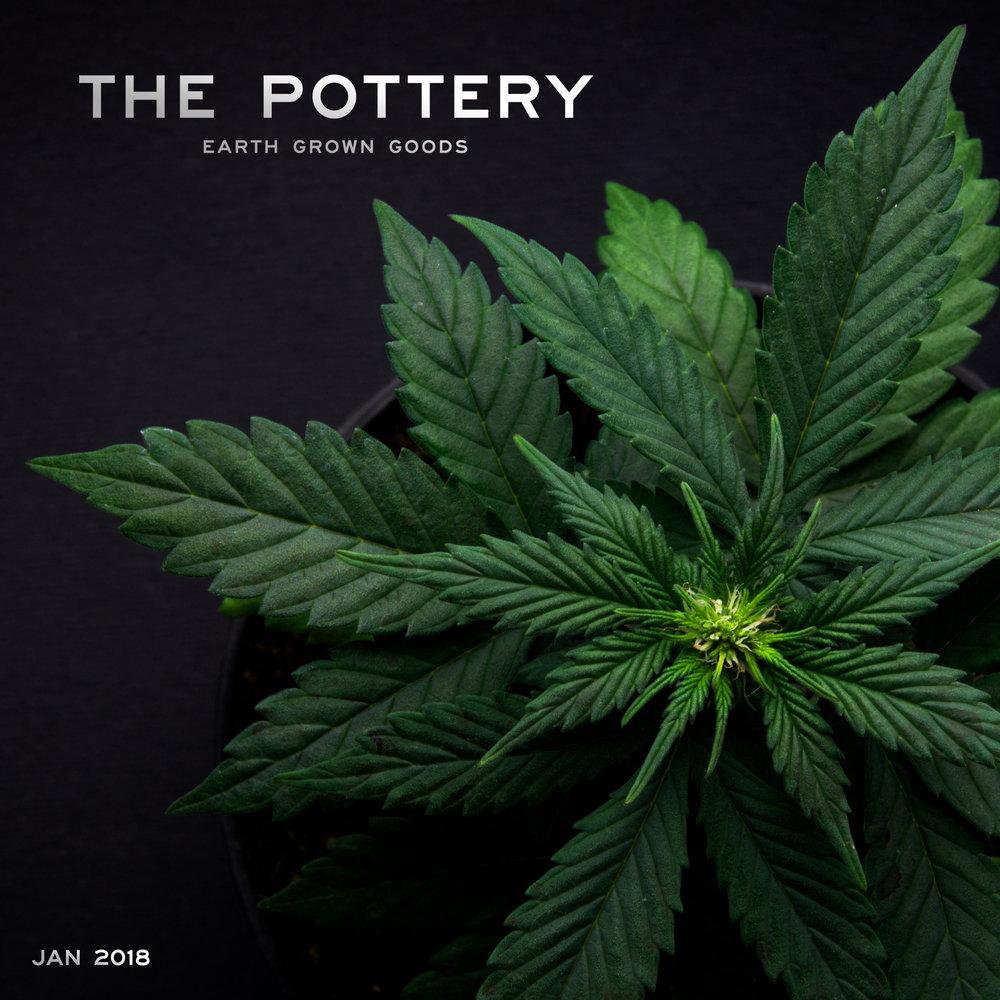Marijuana Leaf Pottery square 2.jpg