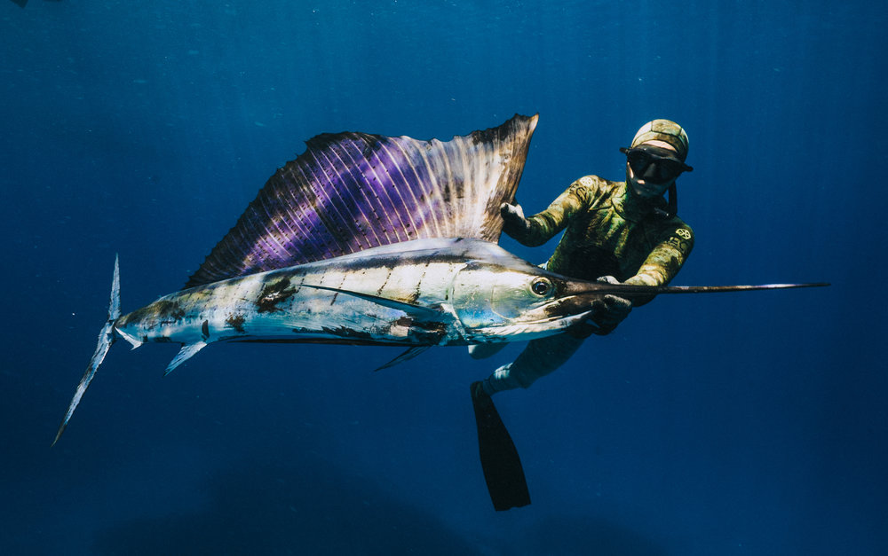 SPEARFISHING TRIPS - Azores | Cape Verde | NEW ZEALAND | Madagascar
