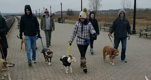 Heel - Polite leash walking without any pulling! Auto sits when stopping. Any minor leash reactivity addressed & resolved.