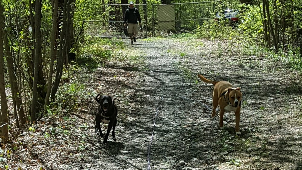 """Recall - The """"Come"""" command. Take your dog off leash knowing that they will return to you when called."""
