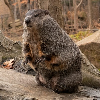 Groundhog Fun Day - Cleveland Museum of Natural History - February 2, 2019