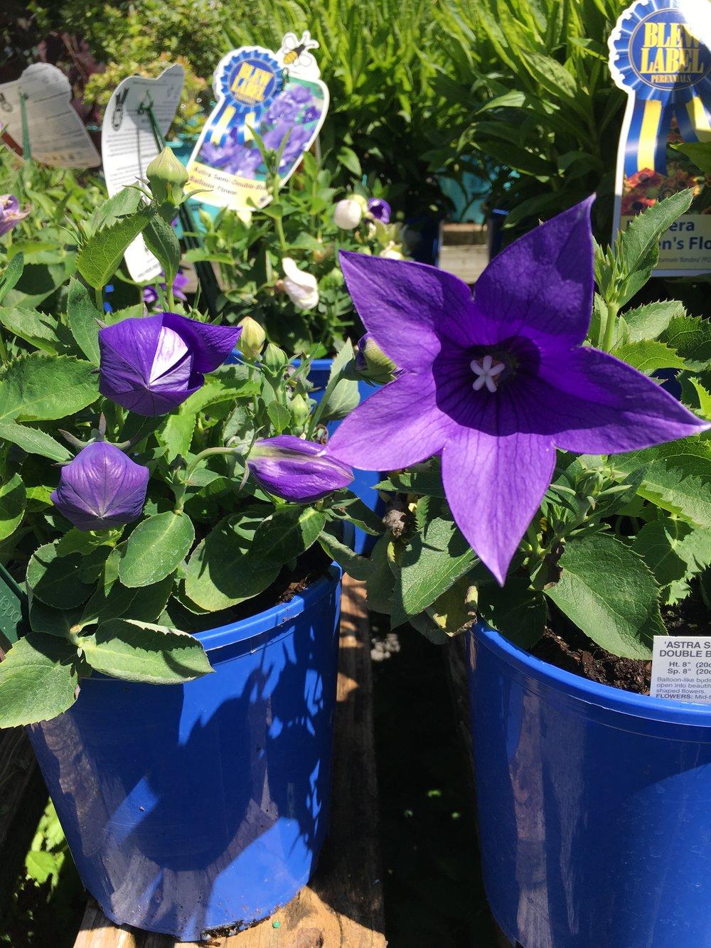 Plants Olsens Nursery