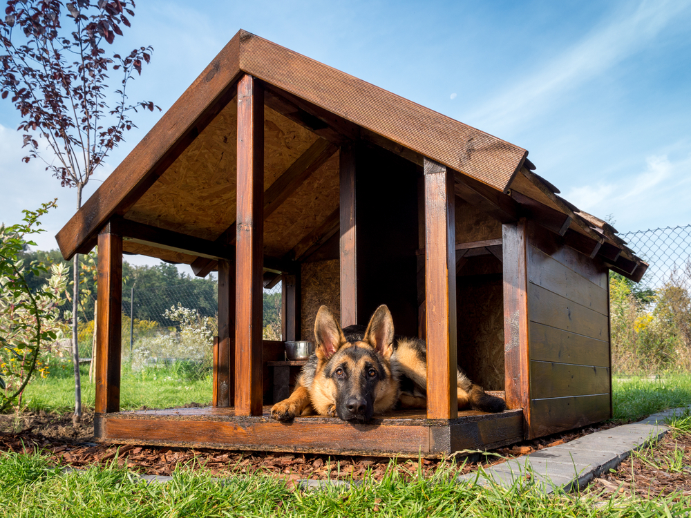 Luxury Dog Kennels