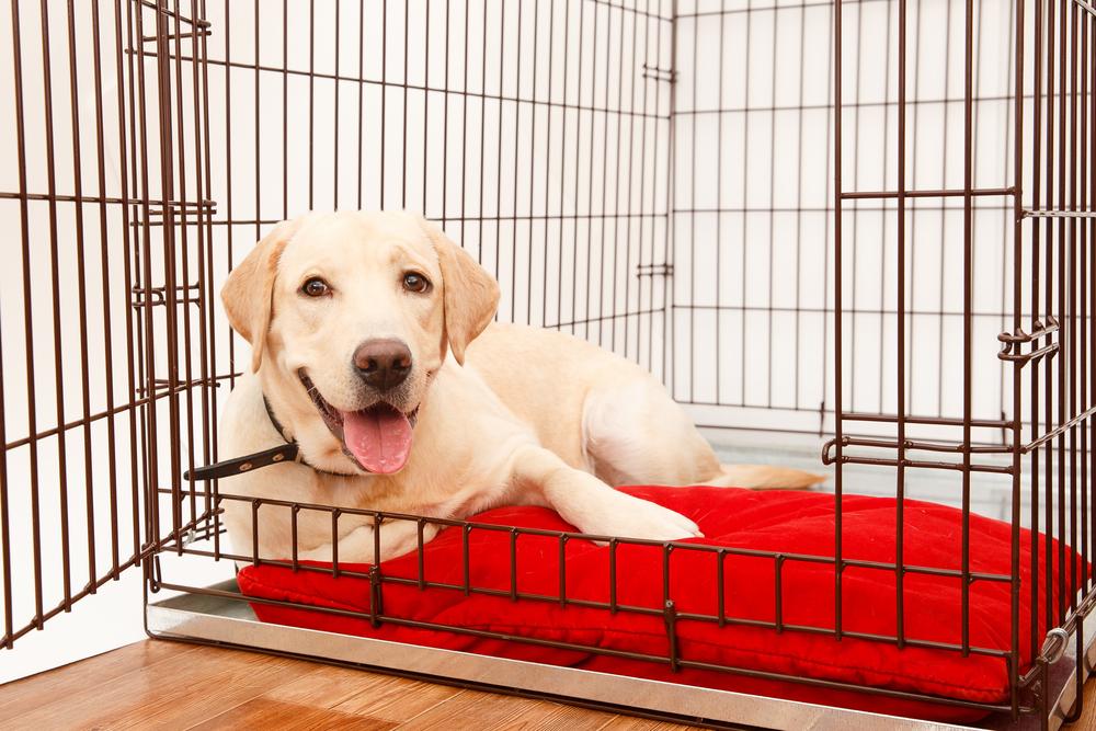 Stylish Dog Crates