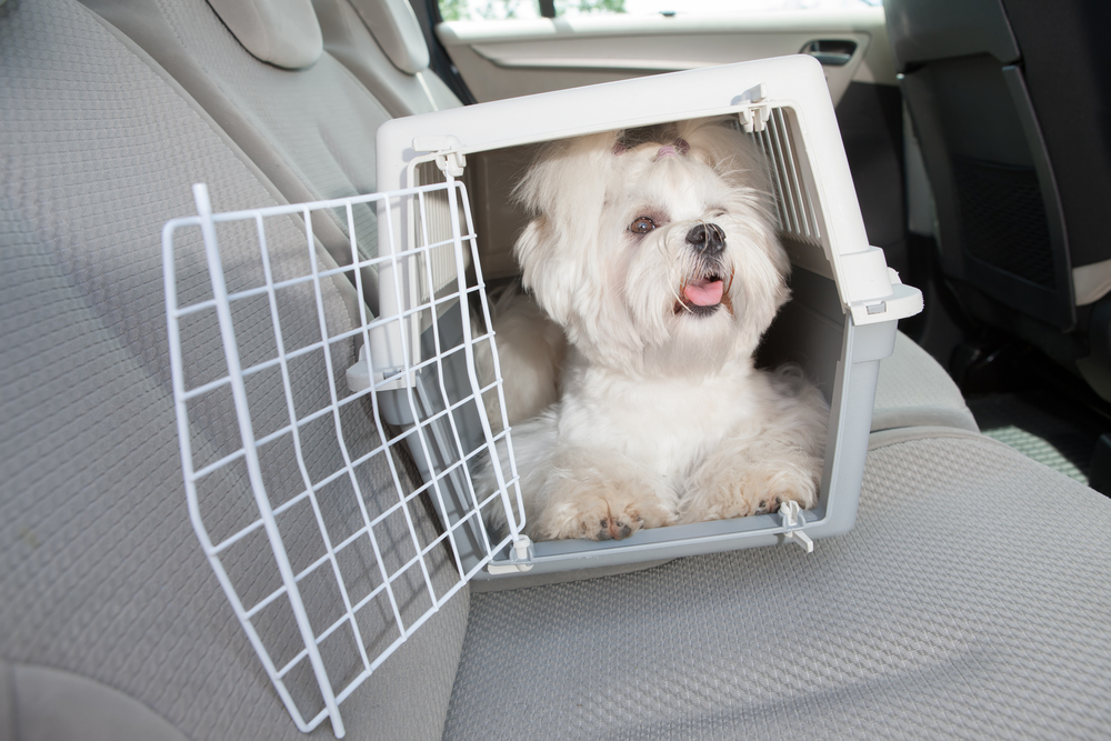 small size dog crate