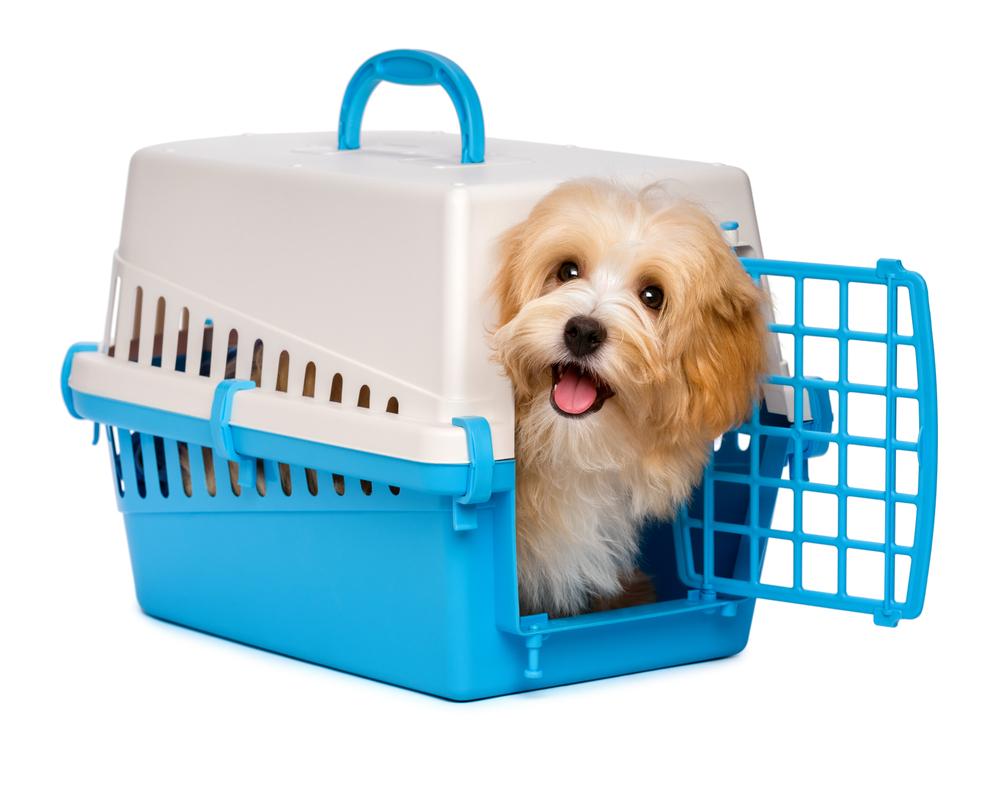 IATA standard dog crate