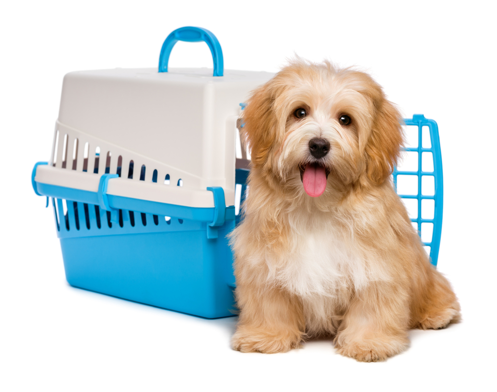 Dog with A Crate