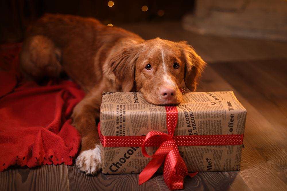 A Dog with a gift holding