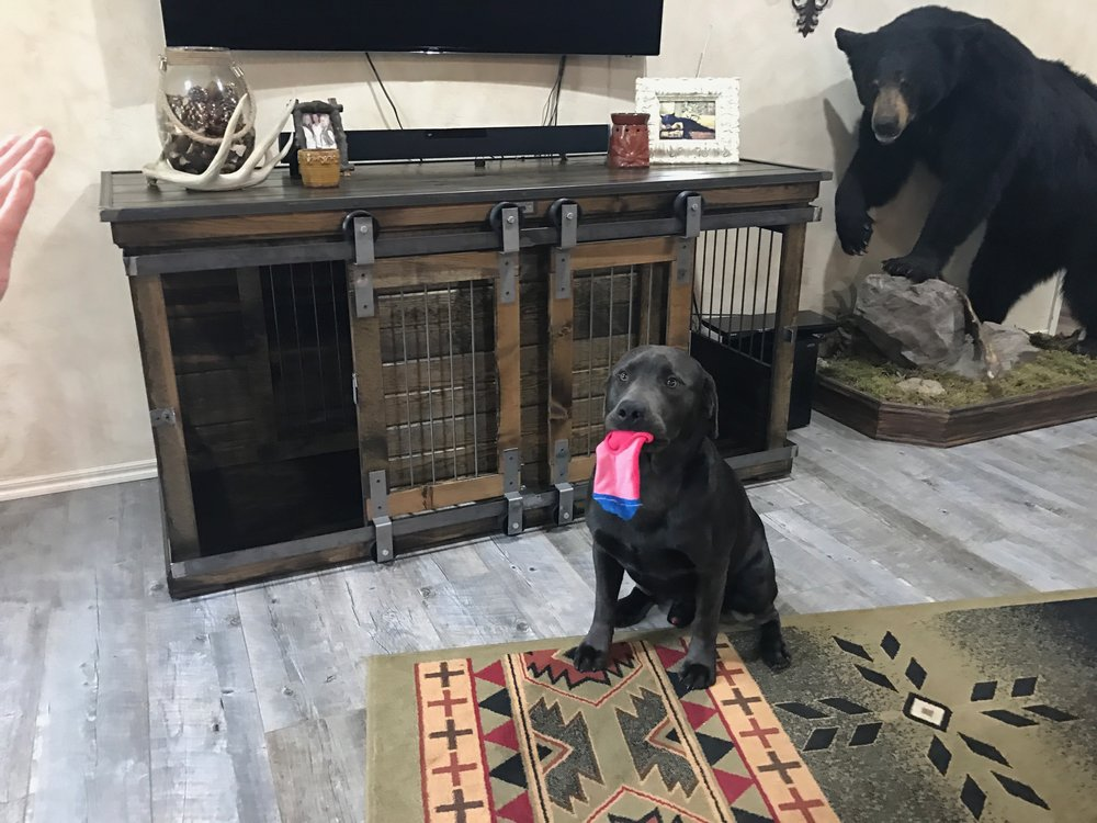 Luxury Dog Kennels.jpg