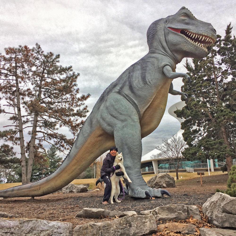 @emiannsan : Hear me roarrrr! Woof! 🐶#dinosaurdogs #explore #samoyed#dogsofinstagram