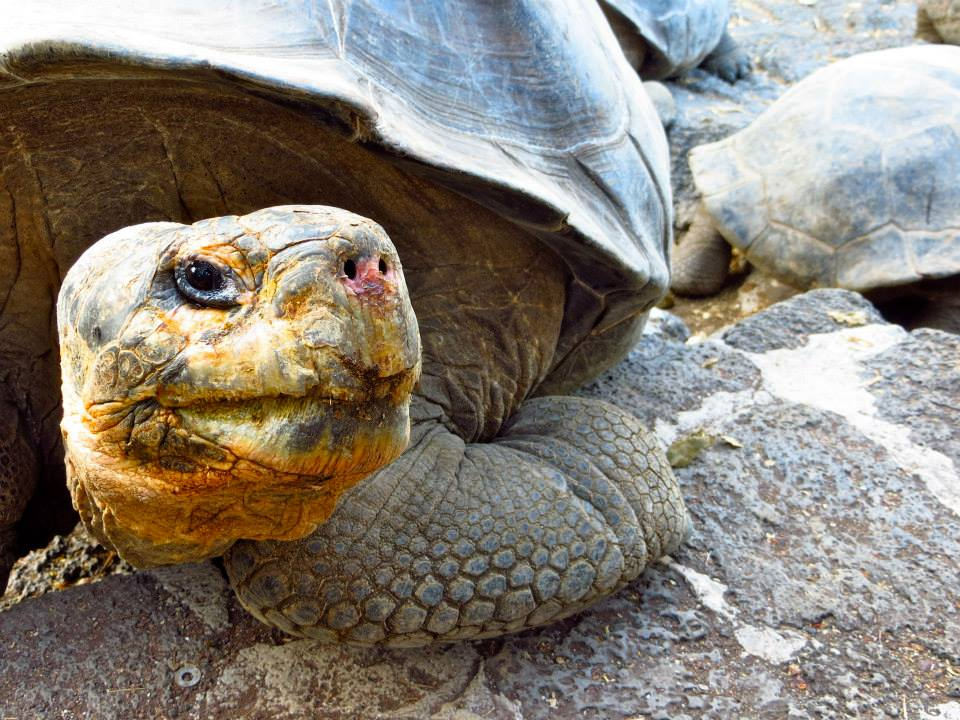 turtle side-eye.jpg
