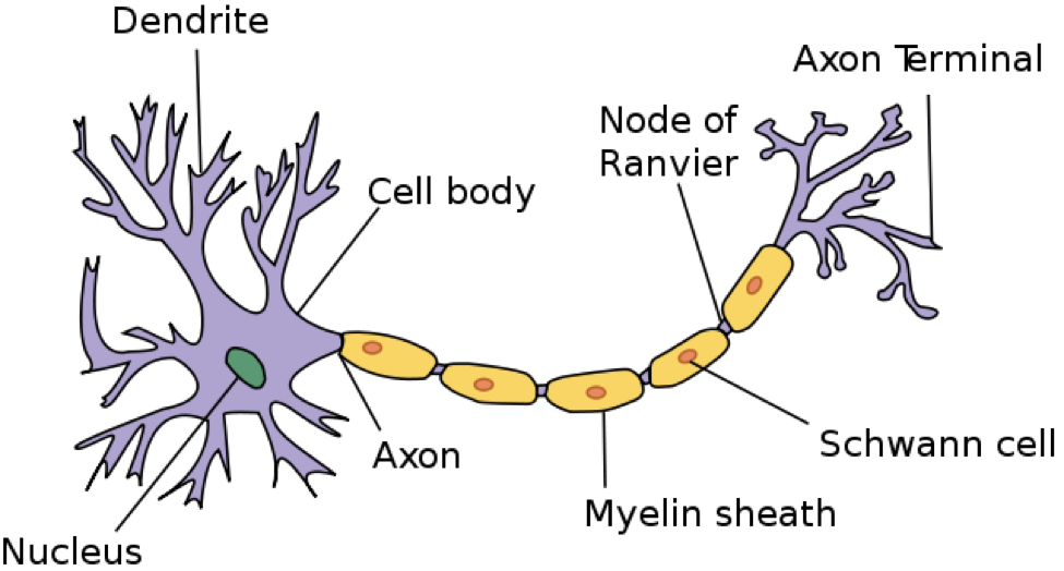 Get To Know Your Brain The Axon Project