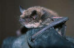 bats3.jpg