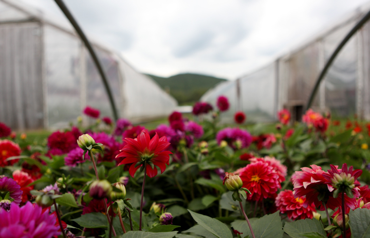 rainy day red flowers greenhouses mountains.jpg