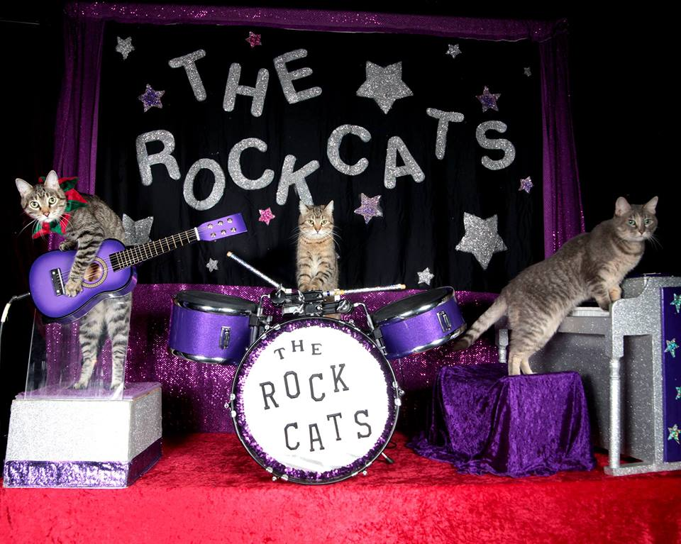 The Rock-Cats: Performing  January 28-31  at The Heights Theater.