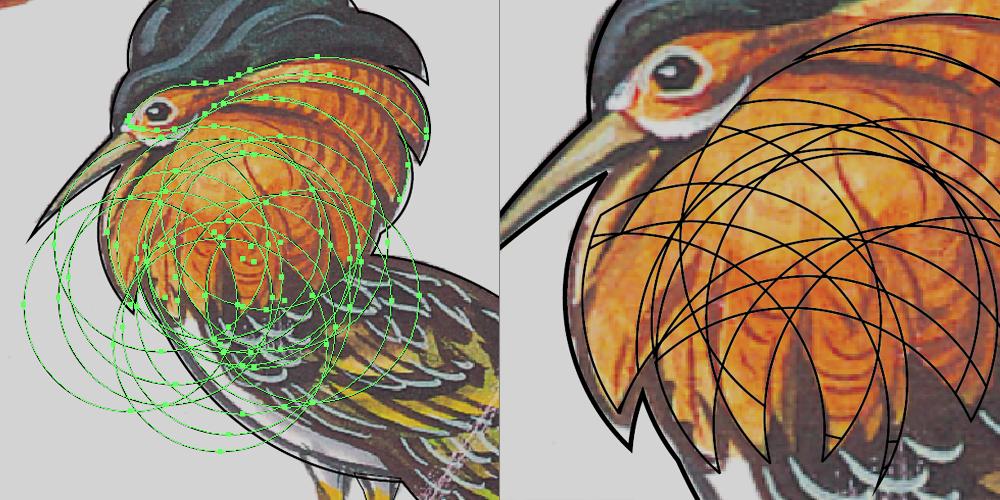 Drawing the Ruff bird using circles