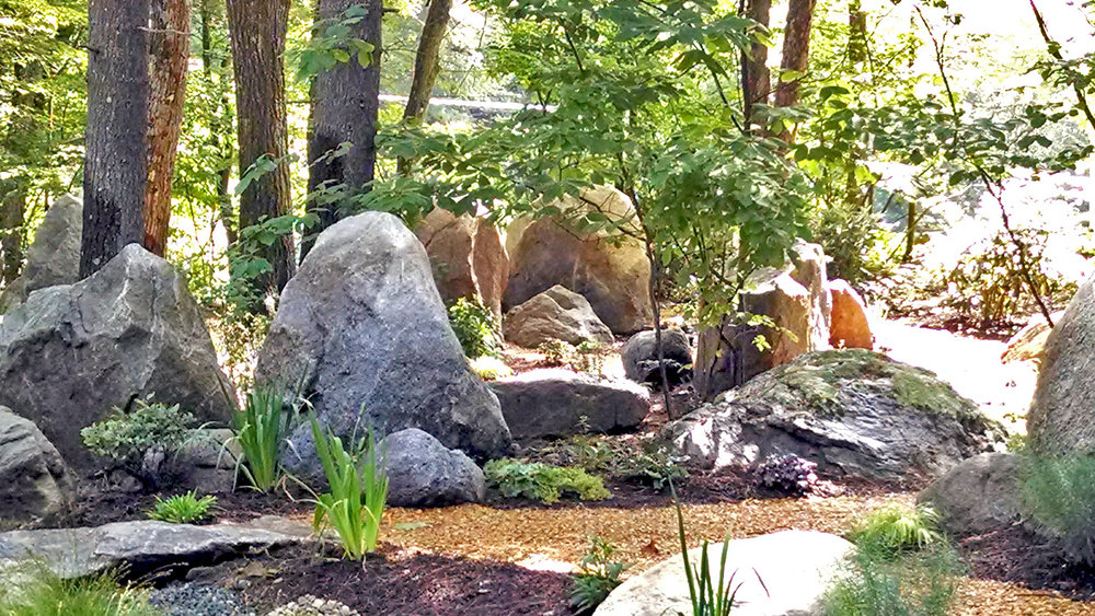 native plants soften boulders