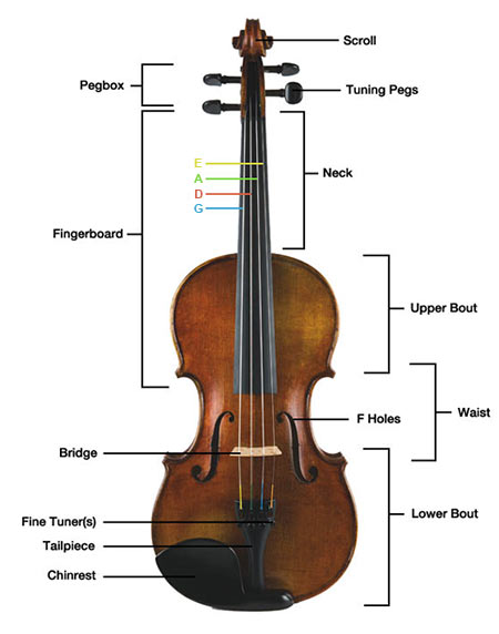 parts-of-the-violin.jpg