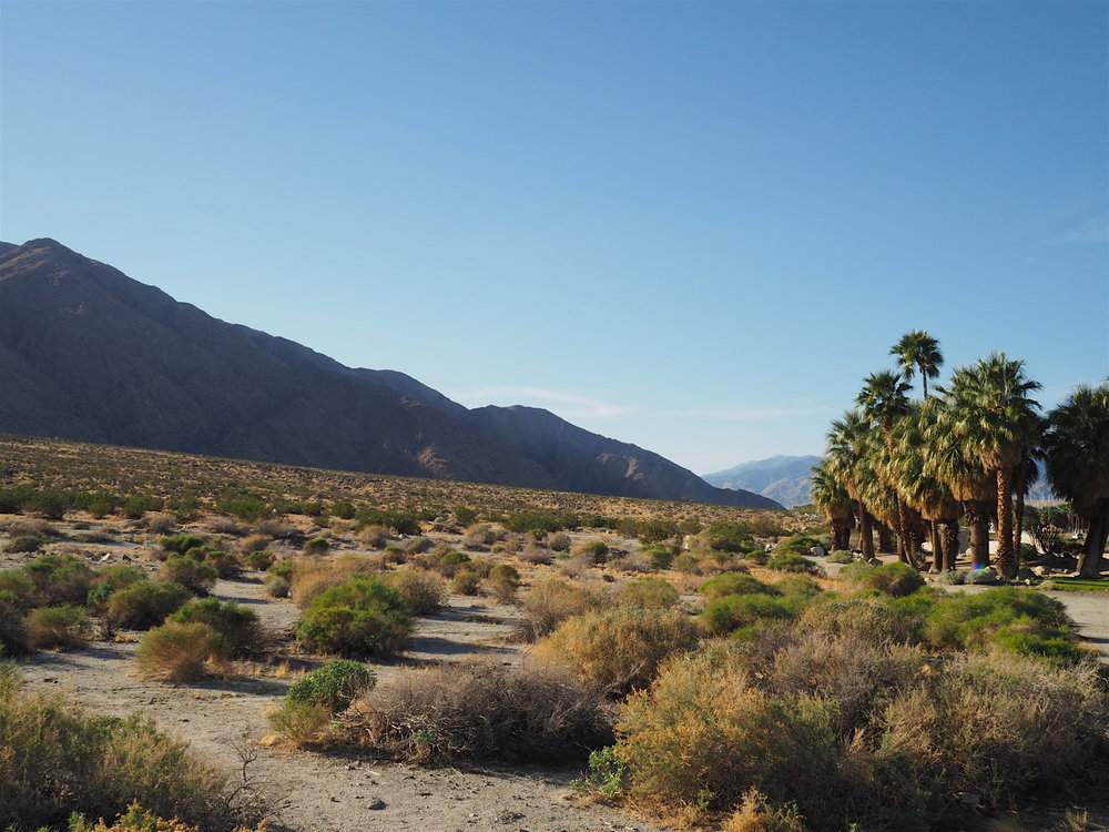 palm springs palms.JPG