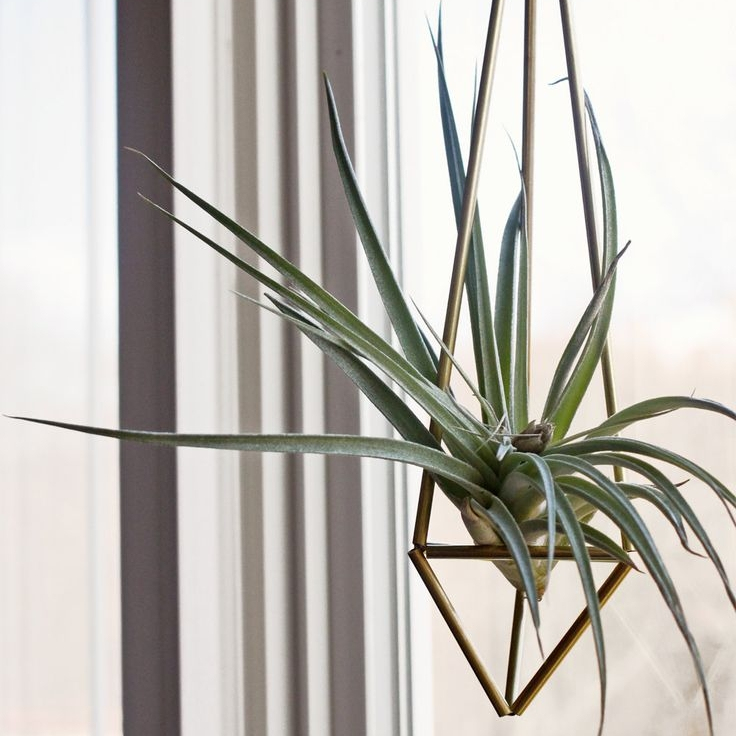 Shop Tamarack Design Group   Shop our collection of handmade items from the comfort of your home.  Our plants and airplants live in our studio before they ship to you and will be in healthy and pest free form when they arrive to live happily ever after with you.