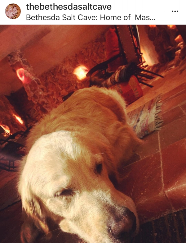 This is Flex, the sweetest golden lab and the Salt Cave mascot! Image via  The Bethesda Salt Cave Instagram