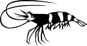 ShrimpWebsite2.jpg