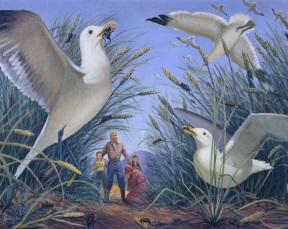 Seagulls.jpg