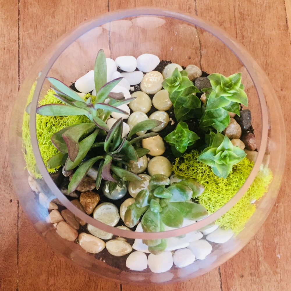 Open Globe Terrarium Workshop