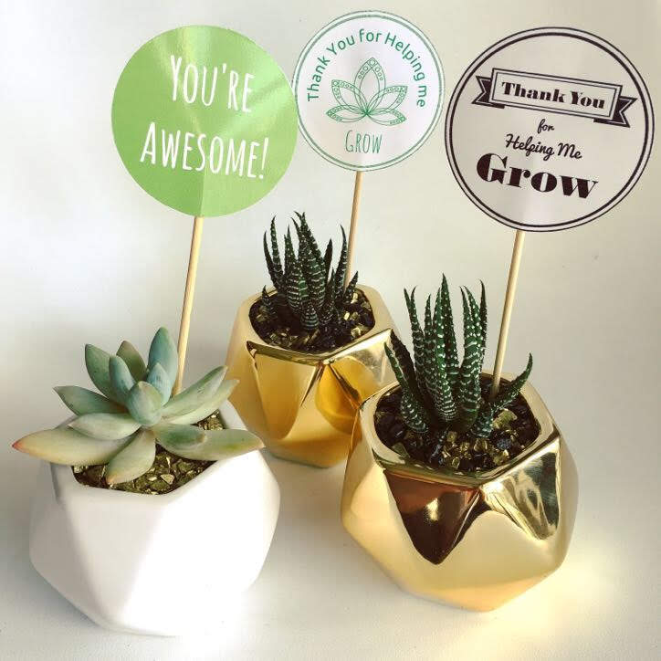Geometric Succulent   Gifts