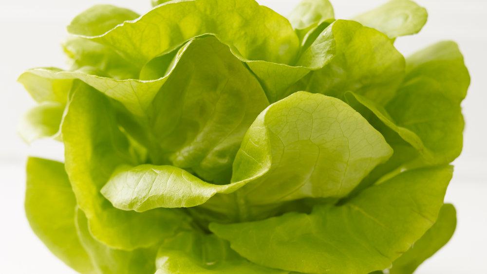 taste_lettuce.jpg