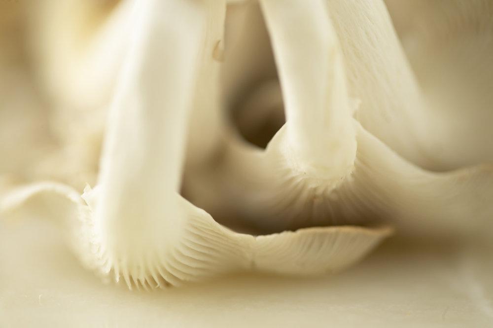 MushroomsCloseUp.jpg