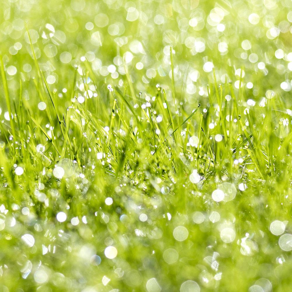 Dew_On_Grass.jpg